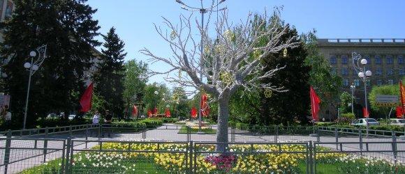 Чудо-дерево раскинулось на пересечении главных улиц города, Аллеи Героев и проспекта им. В.И.Ленина
