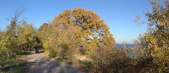 400 летний магический дуб. Дубовка