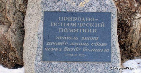 Тополь в Волгограде табличка